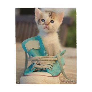 Kätzchen in einem Schuh Holzdruck