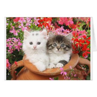 Kätzchen in einem Topf Grußkarte