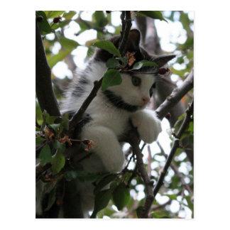 Kätzchen in einer Baum-Postkarte Postkarte