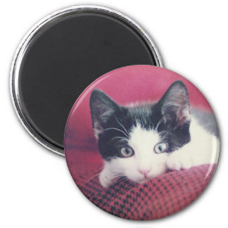 Katzen Magnete