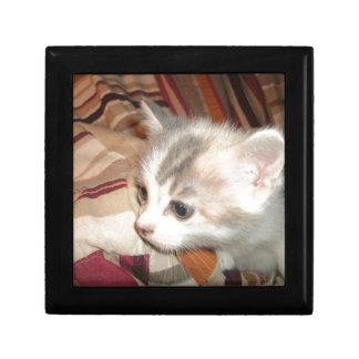 Kätzchen-Material Schmuckschachtel