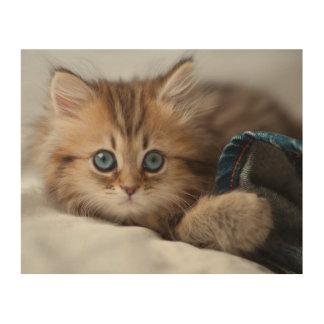 Kätzchen mit blauen Augen Holzwanddeko
