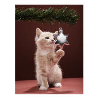 Kätzchen-pawing Weihnachtsdekoration auf Baum Postkarte
