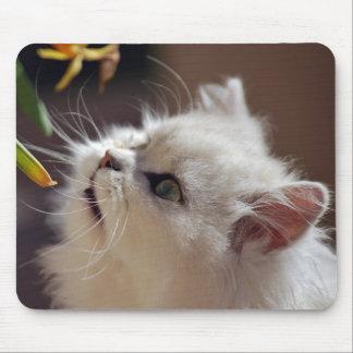 Kätzchen sind Naturliebhaber Mauspads