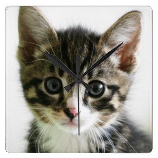 Kätzchen-Starren Quadratische Wanduhr