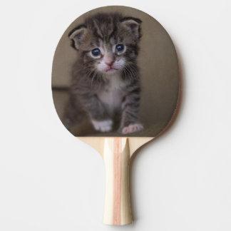 Kätzchen ` tischtennis schläger