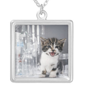 Kätzchen unter gerecycelten Flaschen und Gläsern Versilberte Kette