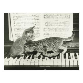 Kätzchen zwei, das auf Klaviertastatur spielt, (B& Postkarten
