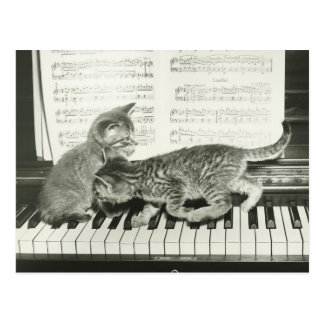 Kätzchen zwei, das auf Klaviertastatur spielt, Postkarte