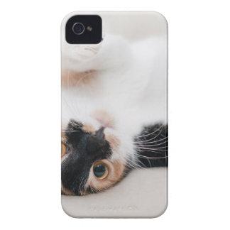 Katze Case-Mate iPhone 4 Hülle