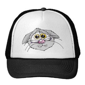 katze, cat, cats, katzen, mütze, cap
