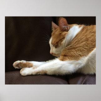 Katze, die auf Sofa schläft Poster