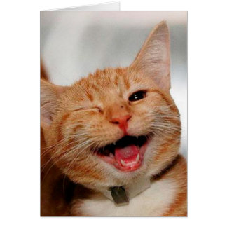 Katze, die blinzelt - orange Katze - lustige Karte