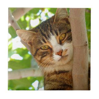 Katze, die einen Baum klettert Keramikfliese