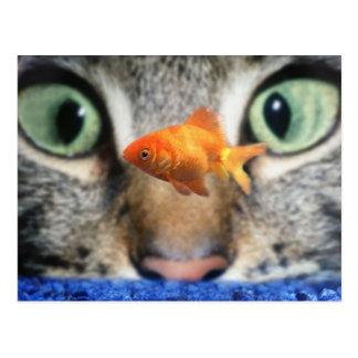 Katze, die herauf einen Goldfisch mustert Postkarten