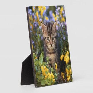 Katze, die im Blumen-Garten sitzt Fotoplatte
