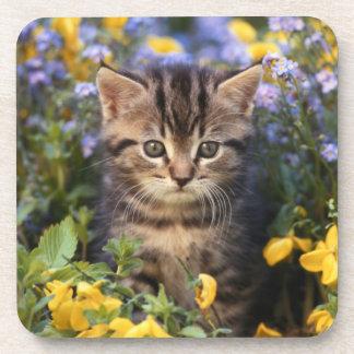Katze, die im Blumen-Garten sitzt Getränkeuntersetzer