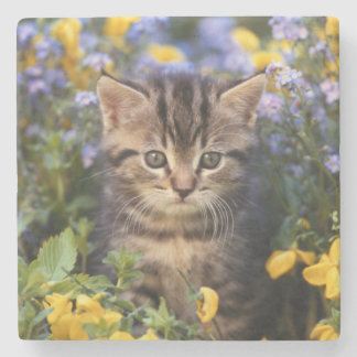 Katze, die im Blumen-Garten sitzt Steinuntersetzer