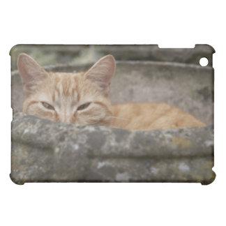Katze, die innerhalb der Urne sitzt iPad Mini Schale