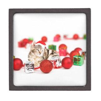 Katze, die rote kiste