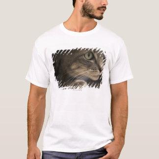'Katze, die sich, Nahaufnahme (Fokus, hinlegt auf T-Shirt