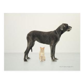 Katze, die unter Deutscher Dogge sitzt Postkarte