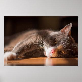 Katze, die von den Sushi träumt Poster