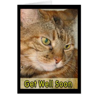 Katze erhalten gut bald karte