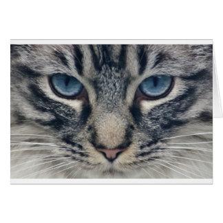 Katze Grußkarte