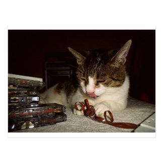 Katze hungrig für Kassetten Postkarte
