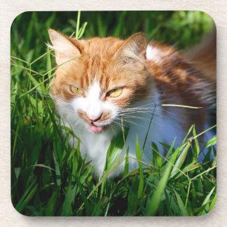 Katze im Gras Untersetzer