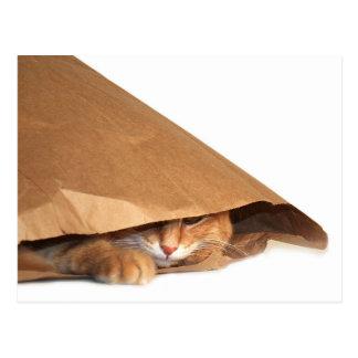 Katze im Sack des braunen Papiers Postkarte