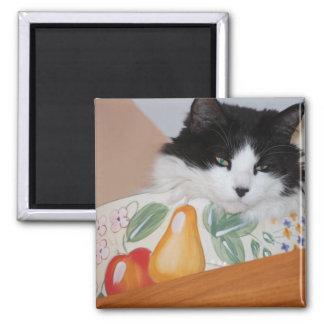 Katze in einer Obstschale Quadratischer Magnet