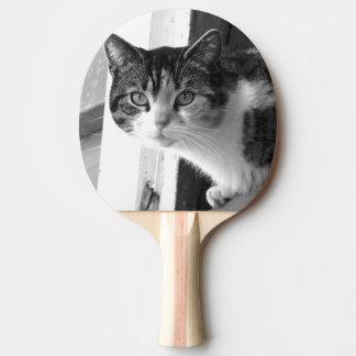 Katze in Schwarzweiss Tischtennis Schläger