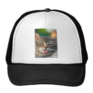 Katze Netzkappe