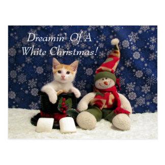 Katze, Kätzchen, Weihnachten, Rettung, Foto Postkarte