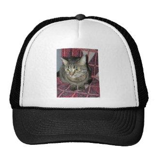 Katze Kultkappe