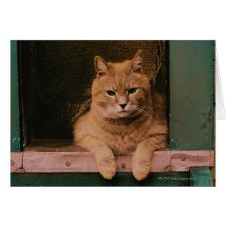 Katze lehnt sich auf Windowsill Karte