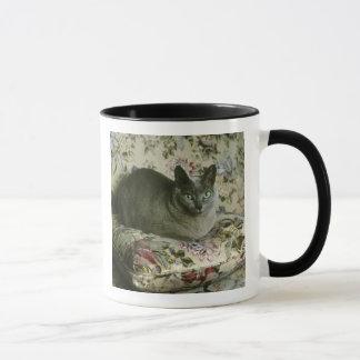 Katze, Minnie, Tonkinese. Tasse