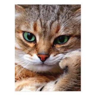 Katze mit Haltung Postkarten