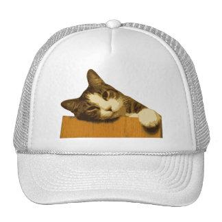 Katze Netzmützen