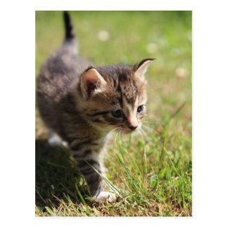 Katze Postkarte