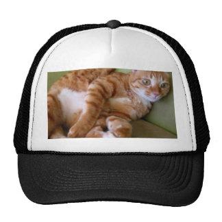 Katze Retrocap