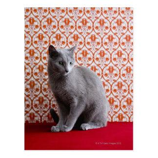 Katze (russisches Blau) und Tapetenhintergrund Postkarte