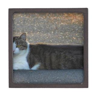 Katze Schachtel