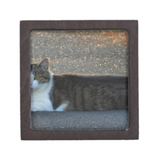 Katze Schmuckkiste