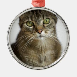 Katze Silbernes Ornament