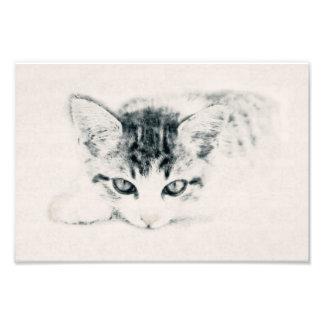 Katze, Tier - Zeichnung, Illustration Fotodruck