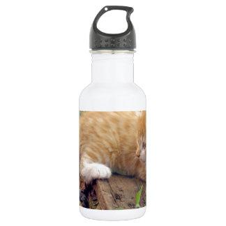 Katze Trinkflasche