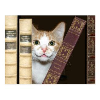 Katze und Bücher Postkarte